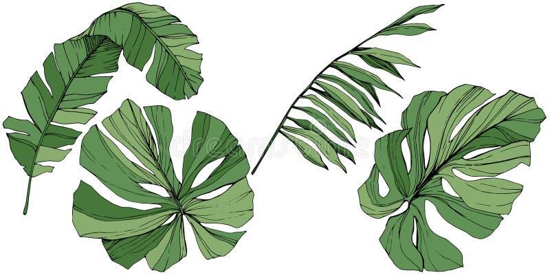 Été hawaïen tropical exotique Art gravé vert d'encre Élément d'isolement d'illustration de feuille illustration stock