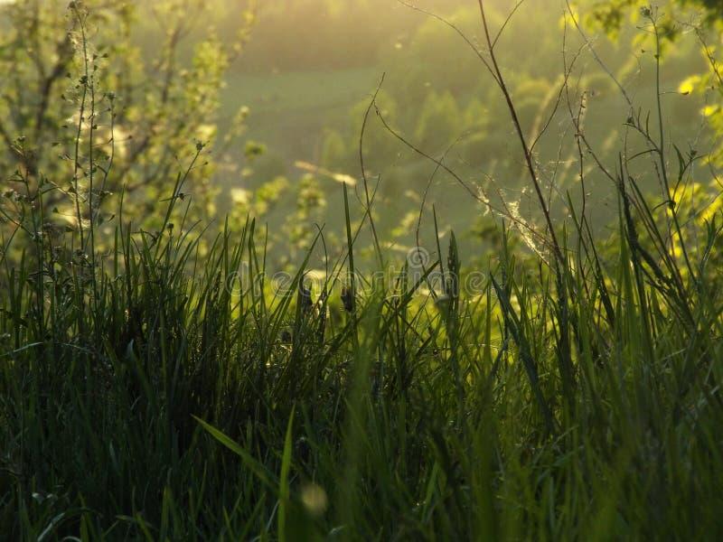 été, herbe photo stock