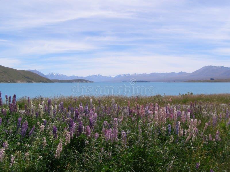 Été Nouvelle-Zélande de Tekapo de lac images stock