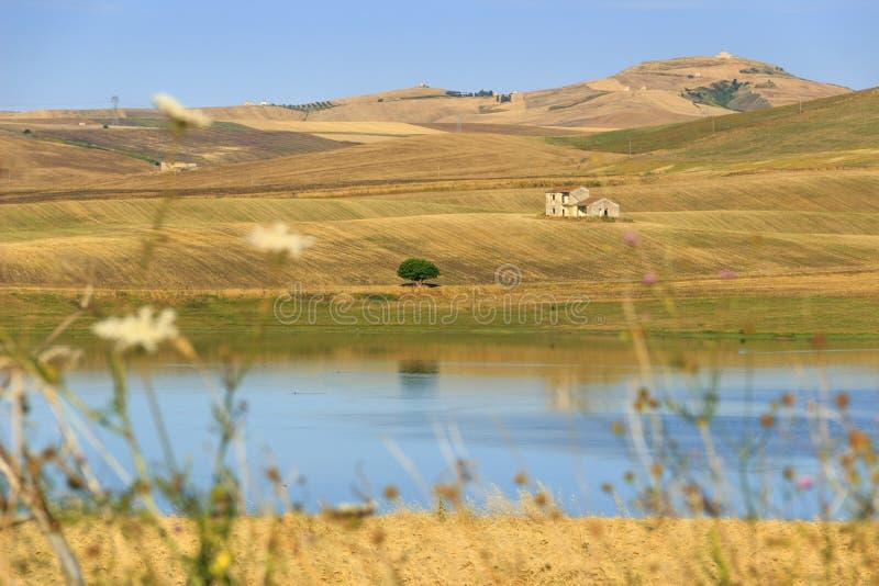 ÉTÉ RURAL DE PAYSAGE Entre Pouilles et Basilicate : champs de blé moissonnés Lac Basentello Poggiorsini - ITALIE photo libre de droits