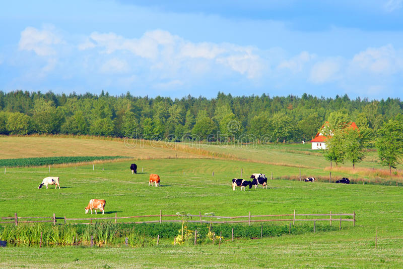 été rural polonais d'horizontal image stock