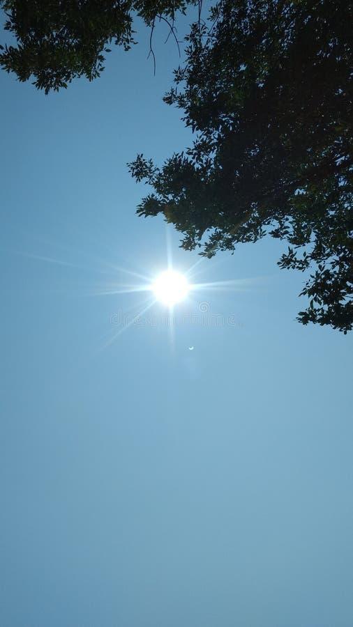 Été Sun photographie stock libre de droits