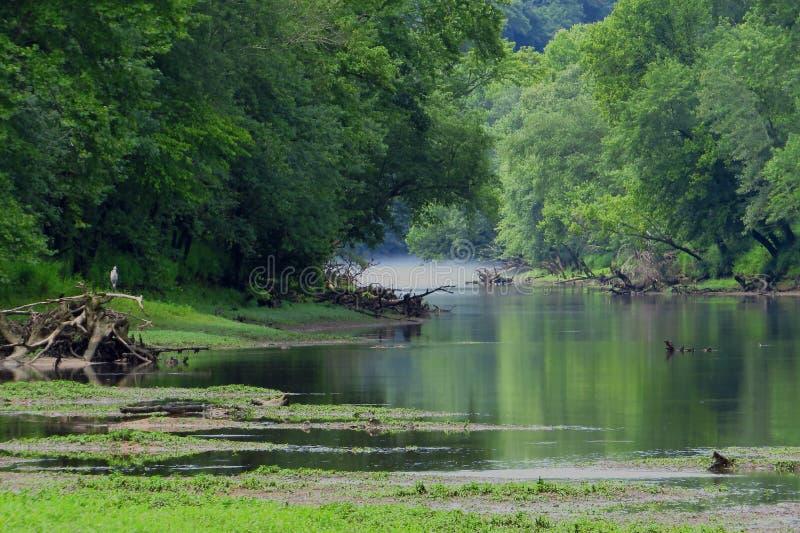 Été sur la rivière de caneyfork photographie stock libre de droits