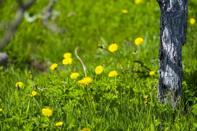 Été : vert et jaune photographie stock libre de droits