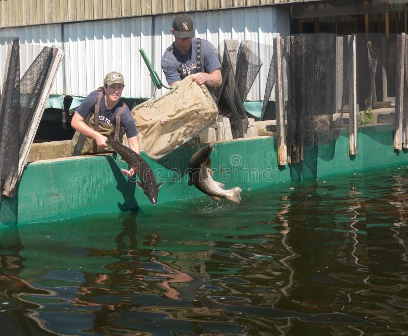 Établissement d'incubation de poissons photo stock