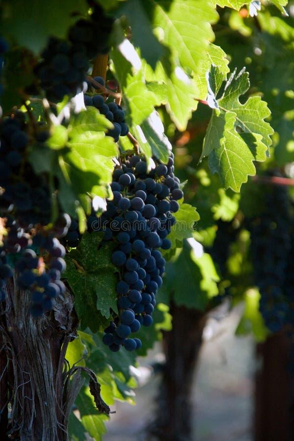 Établissement vinicole photographie stock libre de droits