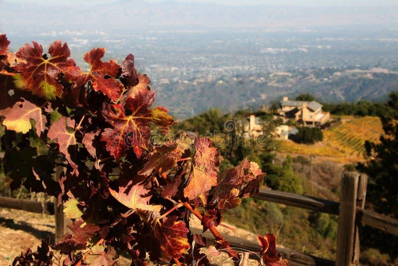 Établissement vinicole d'automne photos libres de droits
