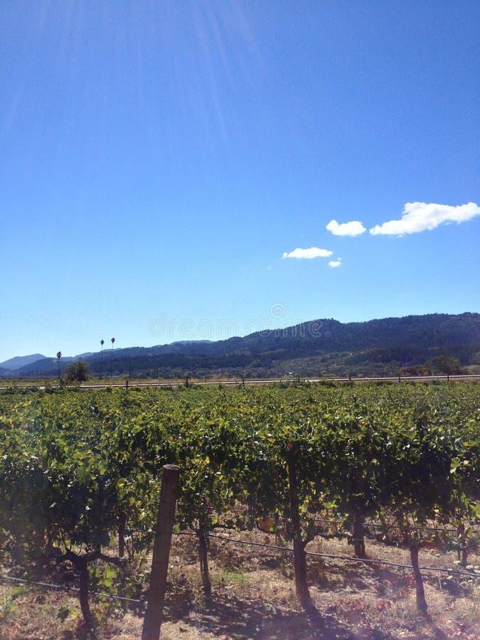 Établissement vinicole de visite de vignes de raisin de cuve de vignoble de Napa Valley photo libre de droits