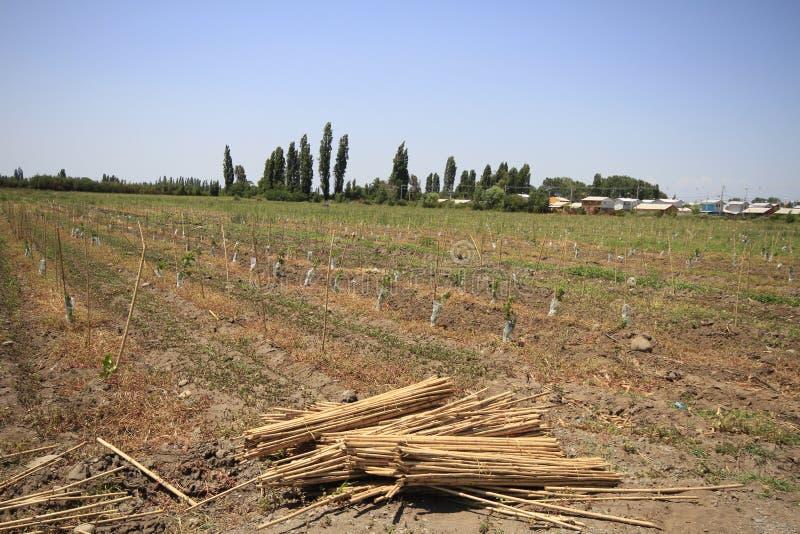 Établissement vinicole Santa Cruz Chile photographie stock libre de droits