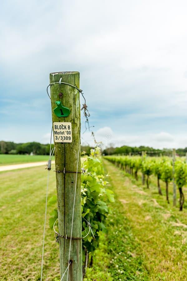 Établissement vinicole sur le rivage oriental du VA image stock