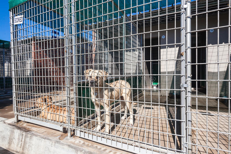 Établissements de chiens attendant des animaux de propriétaires images stock