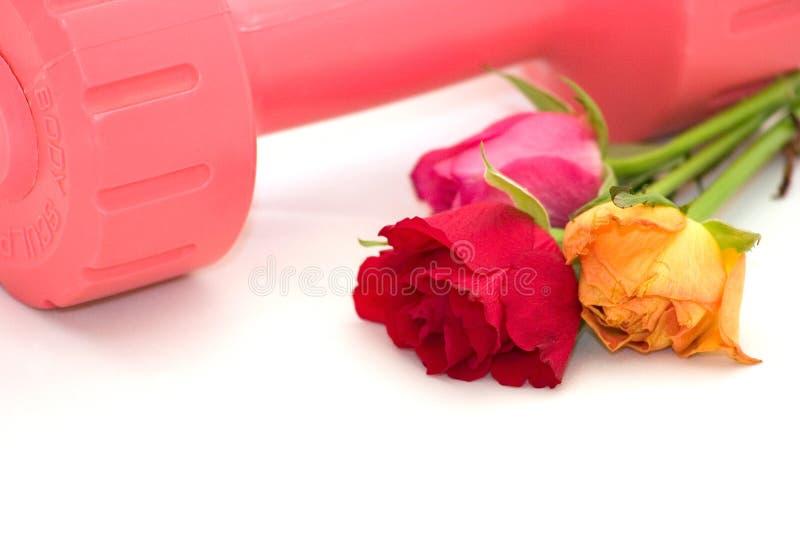 Download Établissez image stock. Image du fleur, sensation, flore - 736417