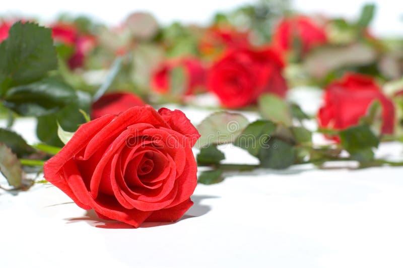 Étage complètement des roses photographie stock libre de droits