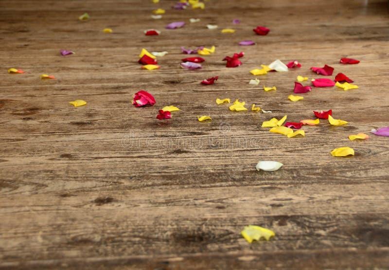 Étage de lames de fleur de Rose images libres de droits
