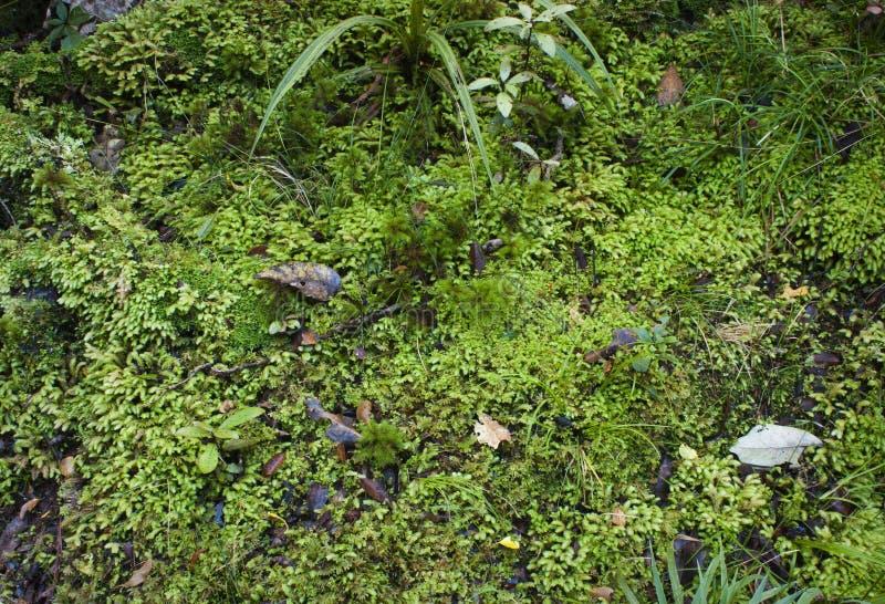 Étage moussu de forêt photo stock