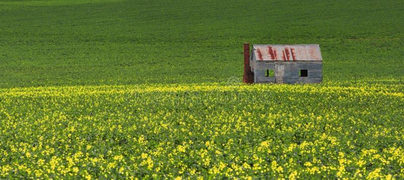 Étamez la cabane dans les domaines du vert et de l'or photo stock