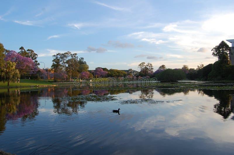 Étang à l'université du Queensland photo libre de droits