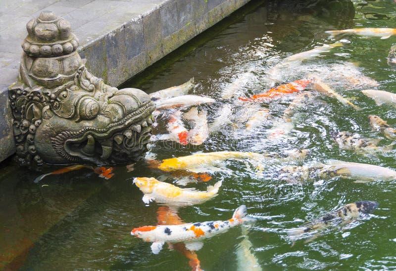 Étang à poissons de temple avec la natation colorée de carpe de Koi près d'un typique image libre de droits