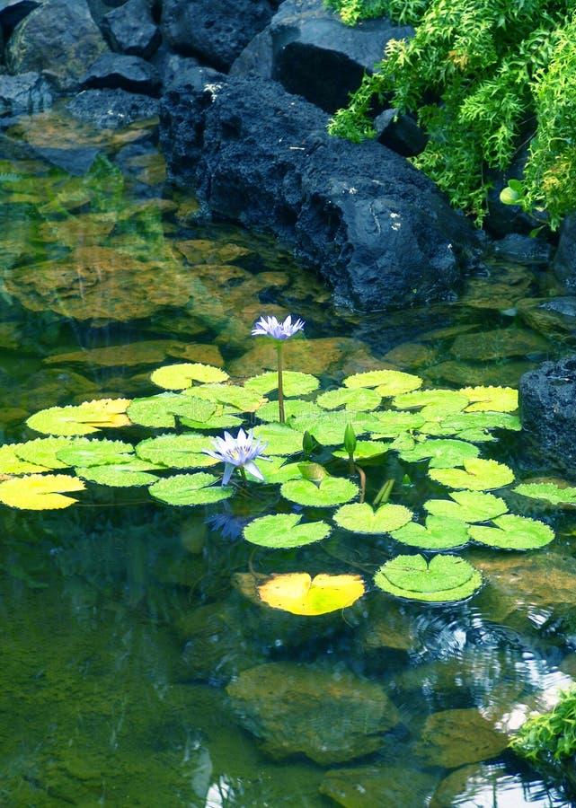 Download Étang photo stock. Image du étang, vert, extérieur, fleurs - 91314