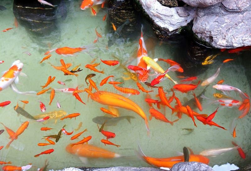 Tang artificiel avec le poisson rouge color photo stock for Poisson rouge artificiel
