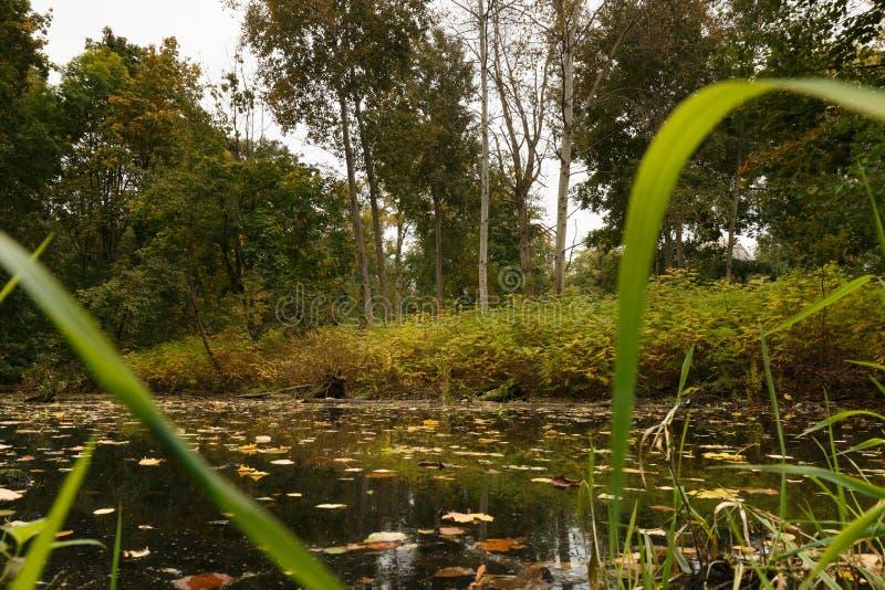 Étang avec des feuilles d'automne image stock