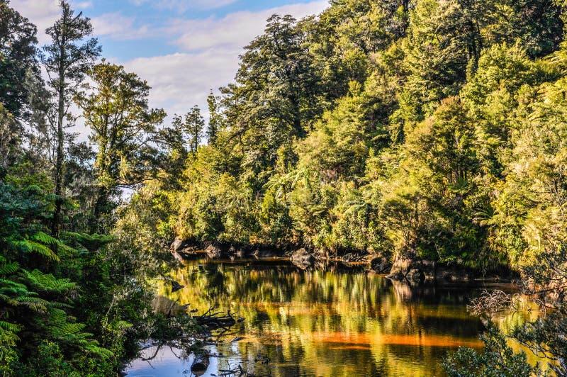 Étang caché en Abel Tasman National Park, Nouvelle-Zélande photo stock