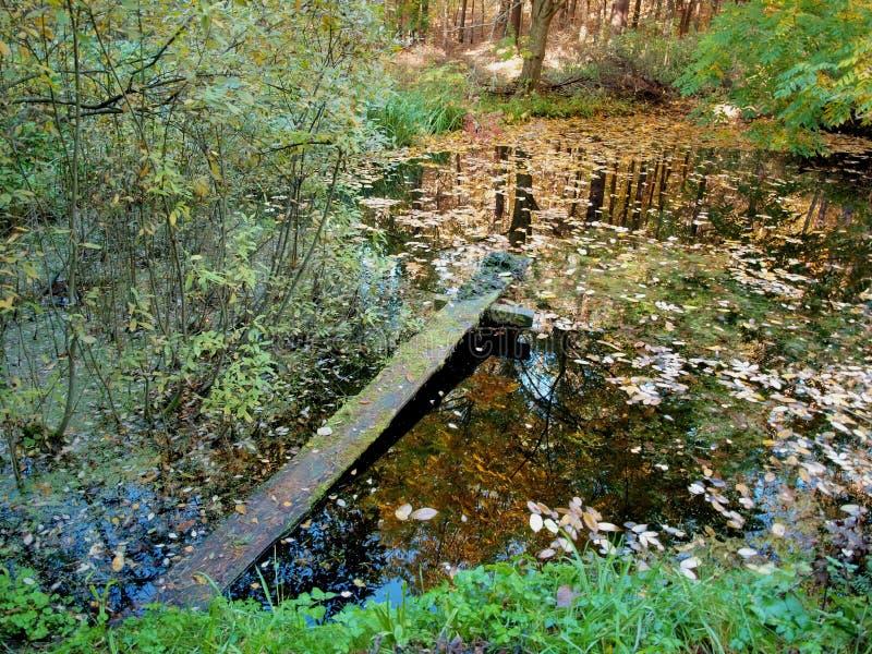 Étang de forêt avec les feuilles tombées et le pont chancelant photographie stock libre de droits