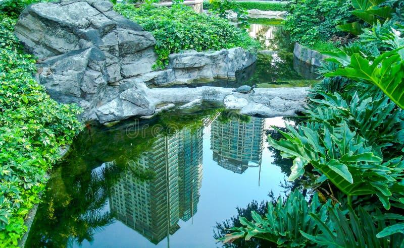 Étang de jardin photo libre de droits