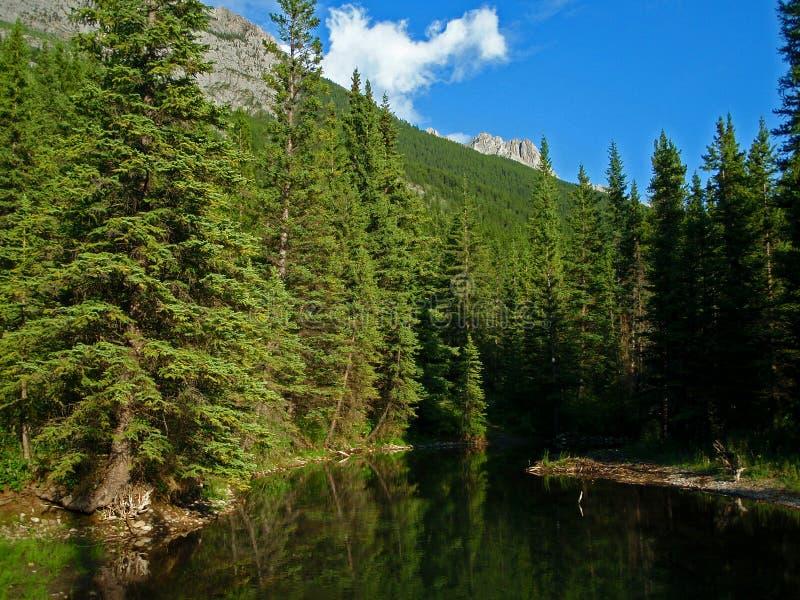 Étang de montagne photographie stock libre de droits