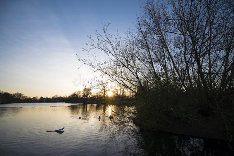Étang de parc de valentines de coucher du soleil photos libres de droits