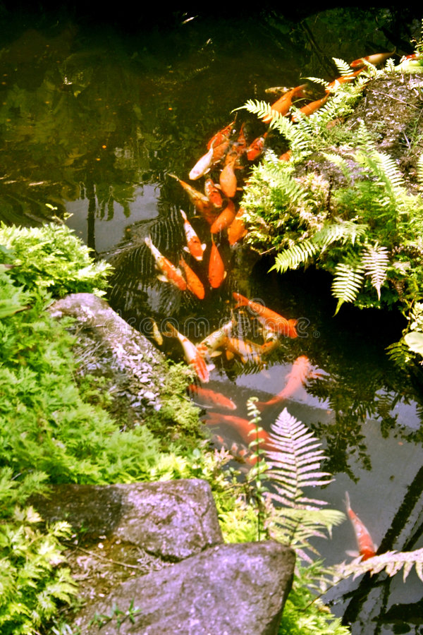 Étang de poissons images libres de droits