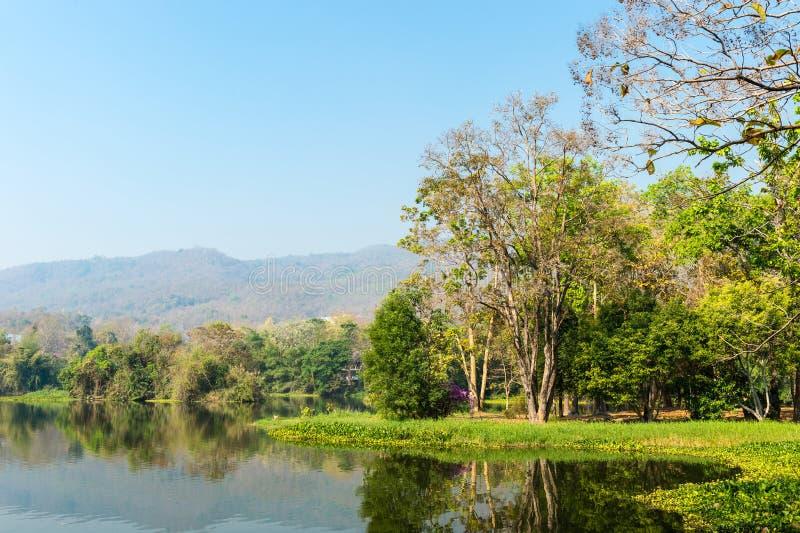 Étang et arbre Forest Landscape photos stock