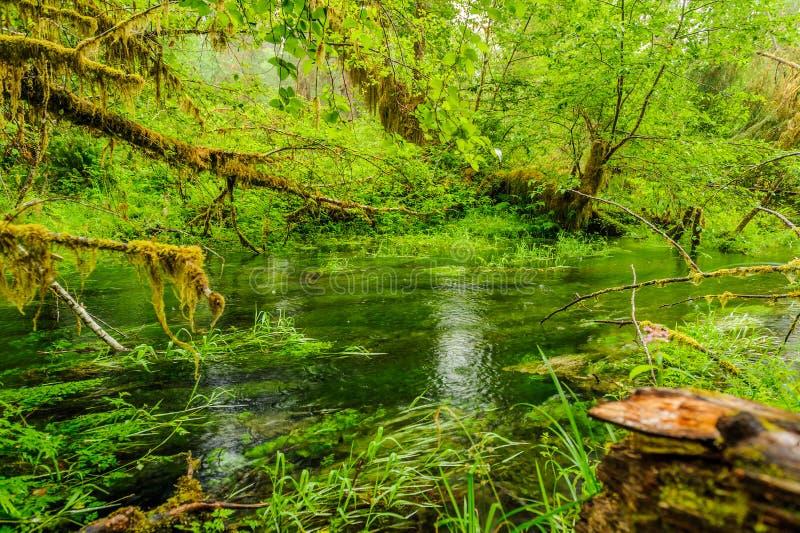 Étang et arbres couverts de la mousse dans la forêt tropicale image libre de droits