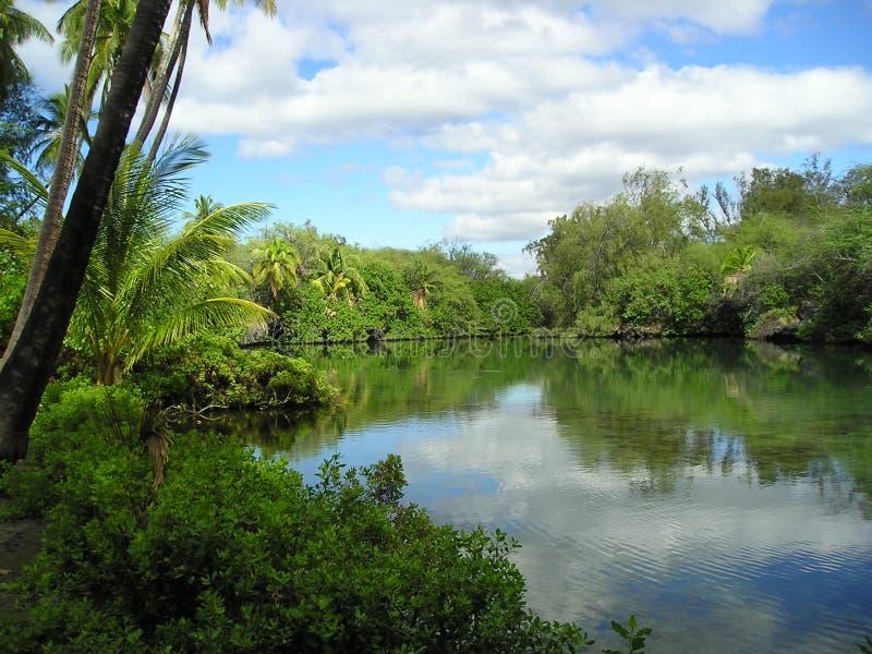 Étang hawaïen photo stock