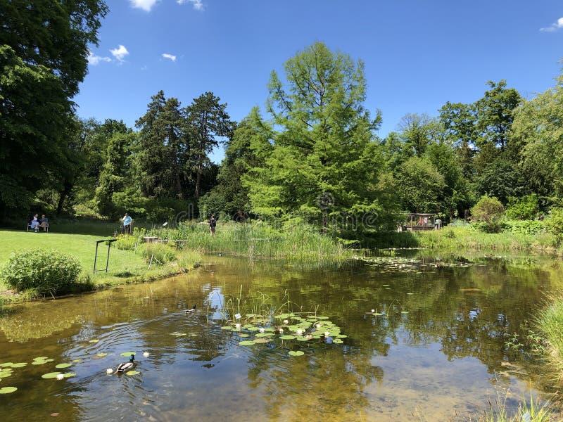 Étang ou Teich - jardin botanique de l'université du der Universitaet Zurich de Zurich ou de Botanischer Garten photographie stock