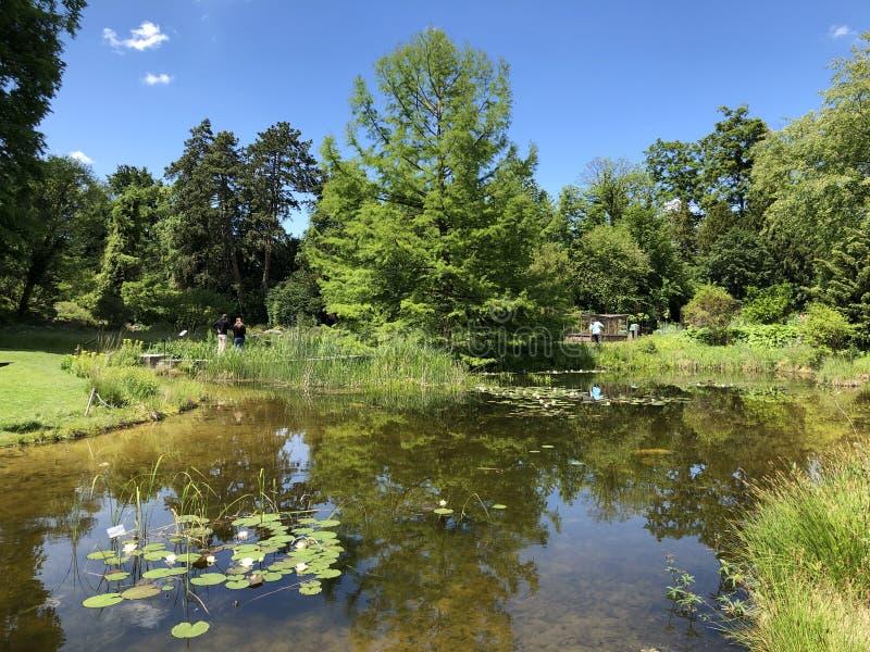 Étang ou Teich - jardin botanique de l'université du der Universitaet Zurich de Zurich ou de Botanischer Garten image stock