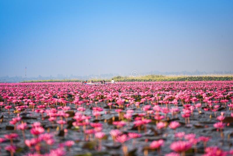 Étang rouge d'Udon Thani Lotus Lake Color de point de repère image libre de droits