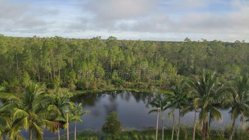 Étang tropical d'arbre photo libre de droits
