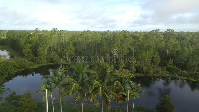 Étang tropical d'arbre photographie stock