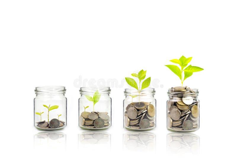 Étape croissante d'usine d'argent avec la pièce de monnaie de dépôt, graine dans la bouteille claire sur le fond blanc investisse photographie stock