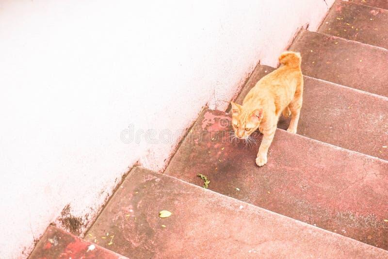 Étape de chat sur les escaliers au temple photographie stock libre de droits