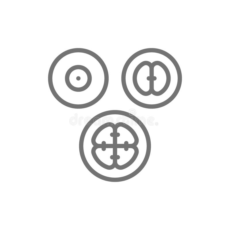 Étapes de division cellulaire, embryons, ligne icône d'embryogenèse illustration libre de droits