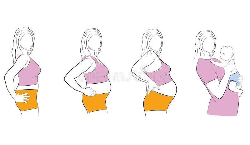 Étapes de grossesse à l'accouchement Illustration de vecteur illustration de vecteur