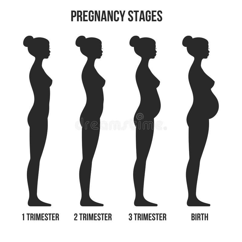 Étapes de grossesse et silhouette d'Infographics de naissance Vecteur illustration libre de droits