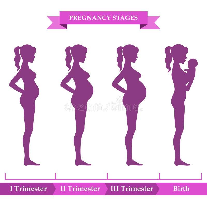Étapes de grossesse Illustration de vecteur Éléments d'Infographic illustration libre de droits