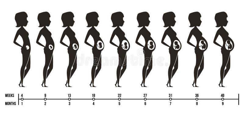 Étapes de grossesse Silhouettes de maman heureuse avec les images femelles de vecteur d'infographics de trimestres de grossesse d illustration stock