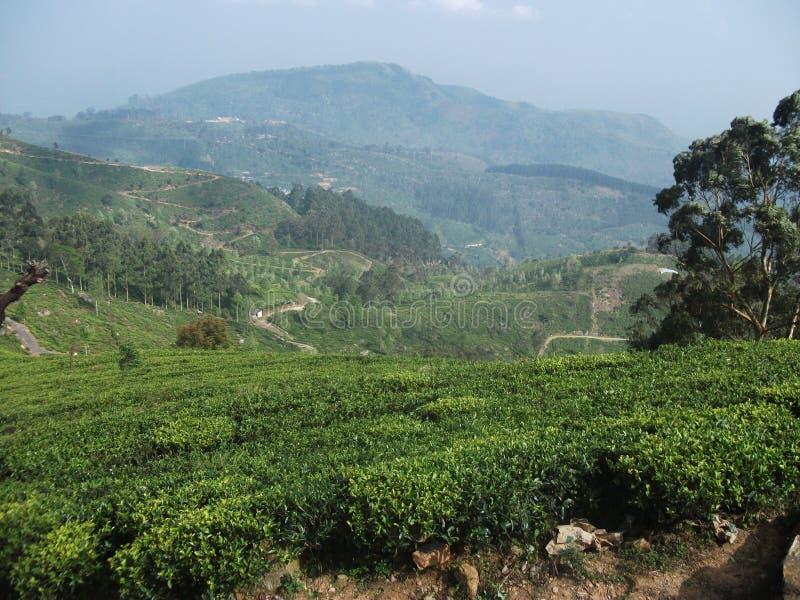 État de thé images libres de droits
