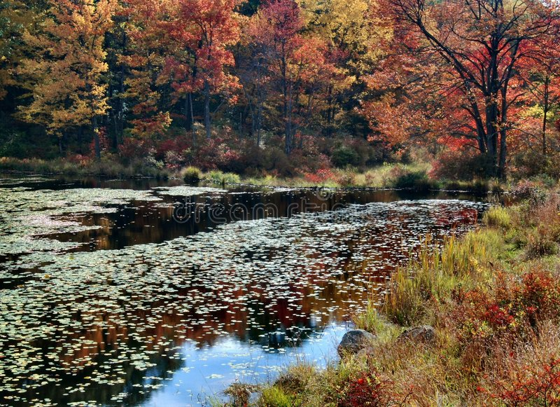 état neuf York de feuillage d'automne images stock