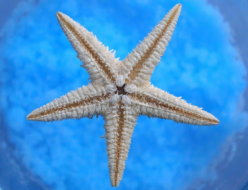 Étoile d'océan photos stock