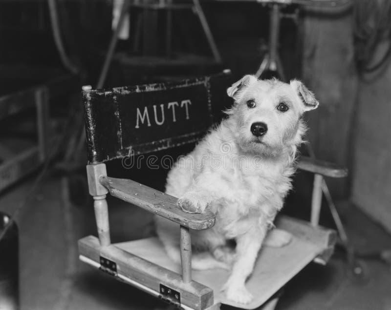 Étoile de chien photo libre de droits